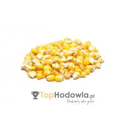 Kukurydza Zwykła 1 kg